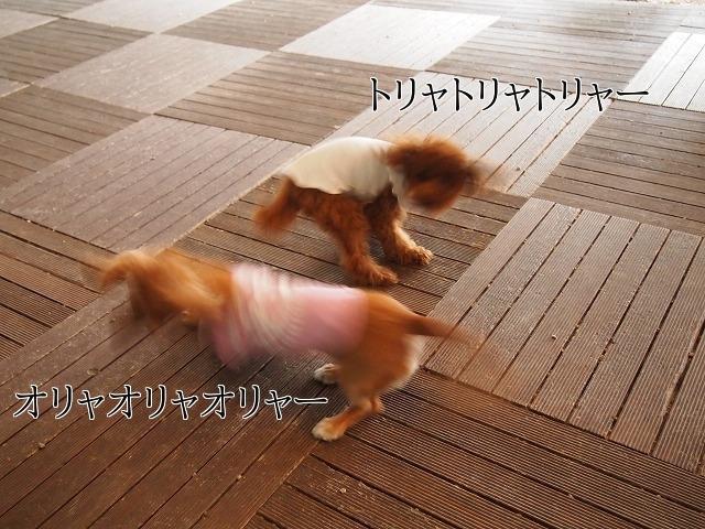 新しいイメージ31.JPG