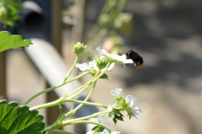 距離 疲れ と 蜂 なぞなぞ 続ける しまう 飛び て が