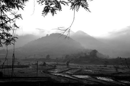 漫撒茶山(旧易武山)
