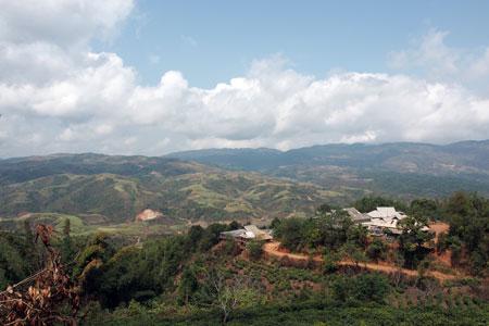 雲南省南部の茶山