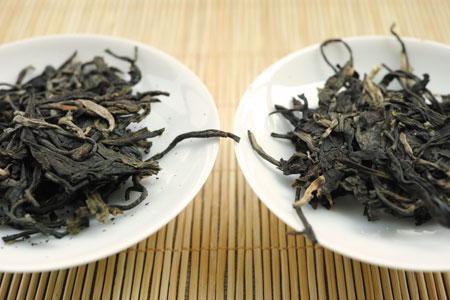 生茶の革登と莽枝の飲み比べ