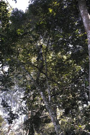 木の上に人がいる