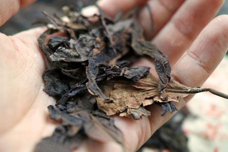 易武山昔の餅茶