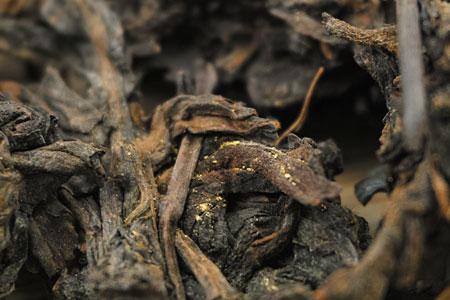 千年古樹プーアル瓜茶90年代