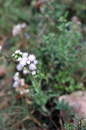 お茶の季節によく見る花