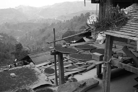 那力山ラフ族の春茶2014年