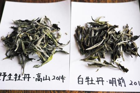 白牡丹・白茶