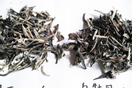 白牡丹の老茶