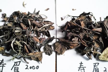 寿眉の老茶