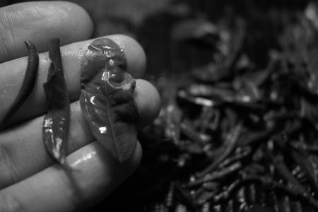 越境野生青餅2010年プーアル茶の葉底
