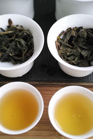 丁家老寨青餅2012年プーアル茶と易武荒野大餅2013年プーアル茶