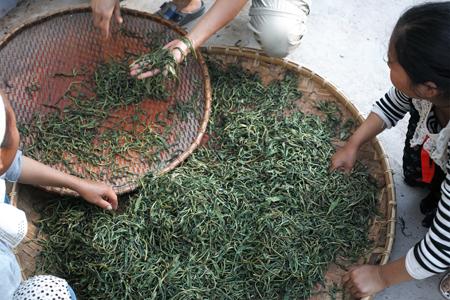 易武山のプーアル茶