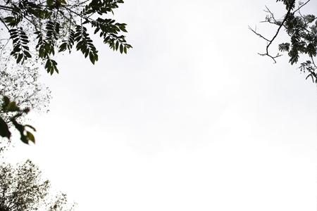 易武山の古茶樹