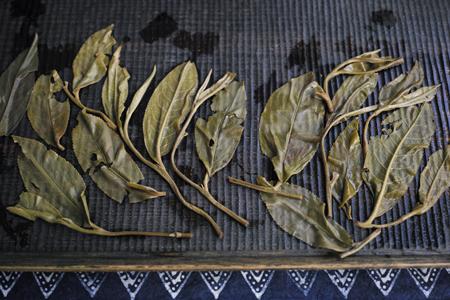 漫撒山と易武山のプーアール茶