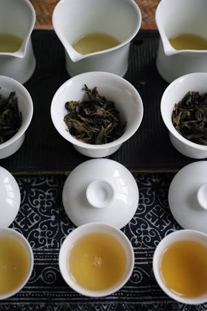 春のプーアル茶2種と、秋のプーアル茶1種