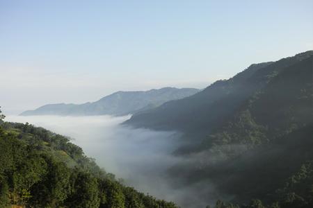 プーアル茶旧六大茶山