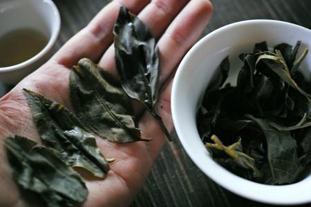 易武山落水洞の散茶2013春