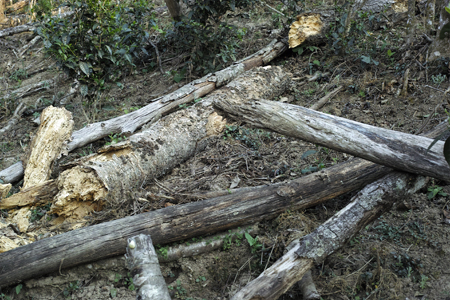 森林の伐採