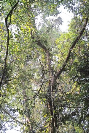 西双版納の森林