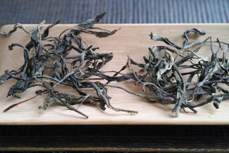 一扇磨単樹A春の散茶2015年
