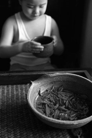 倚邦単樹春の散茶2015年