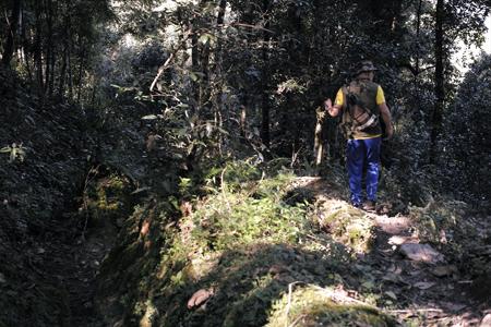 章朗寨の布朗族の茶山