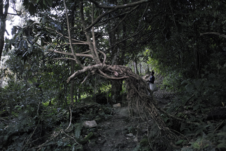 巴達山の森