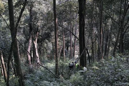 一扇磨の森の下