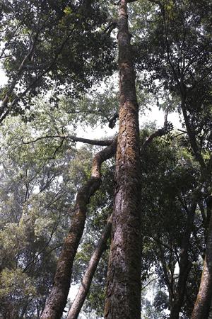 森の樹々上