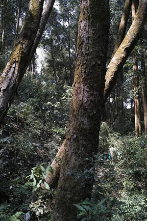 森の樹々下