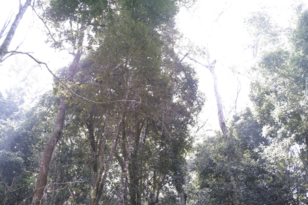 香椿林の森上