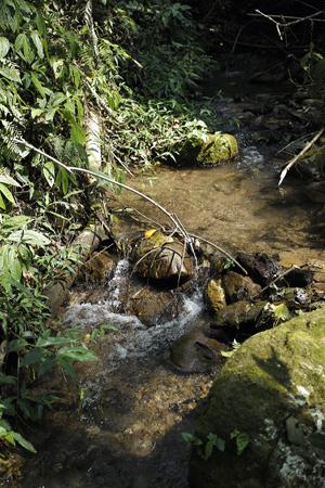香椿林の沢水