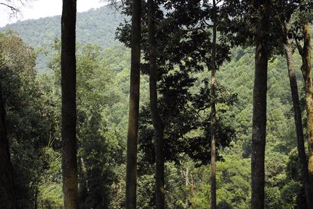 香椿林の森と向かい側の一扇磨の山