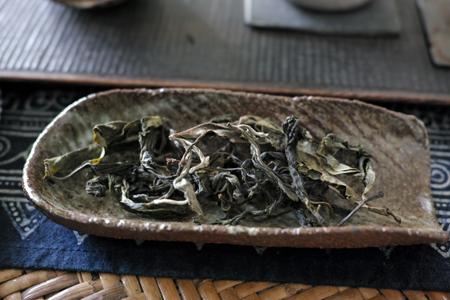 香椿林早春の散茶2016年