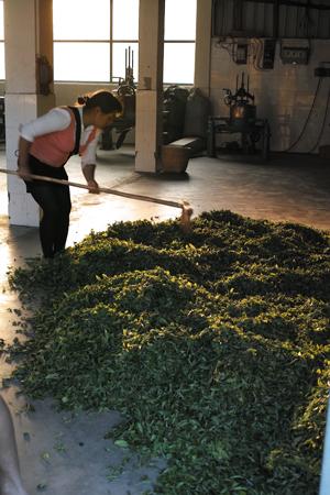 大量生産のお茶