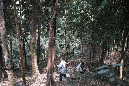 章朗寨の森