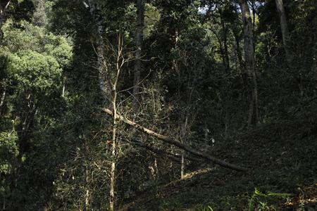 香椿林の森下
