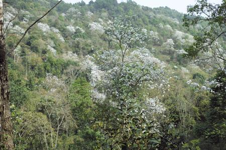 白花の咲く山
