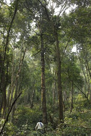一扇磨の森