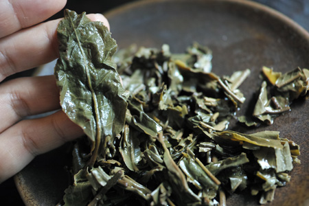 晩春の茶葉