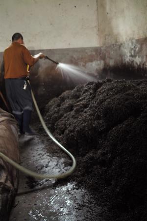 メーカーの渥堆発酵