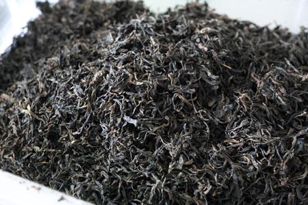 渥堆発酵成功の茶葉