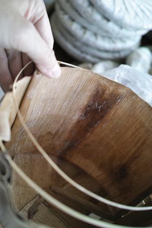 竹皮についた乳酸菌