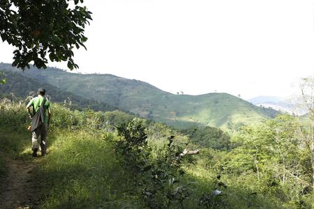 森を失った山