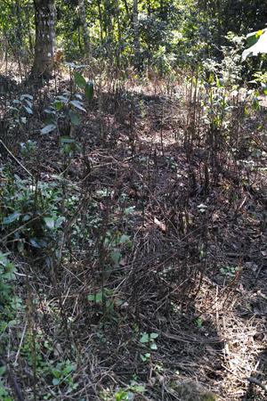 除草剤の撒かれた地面