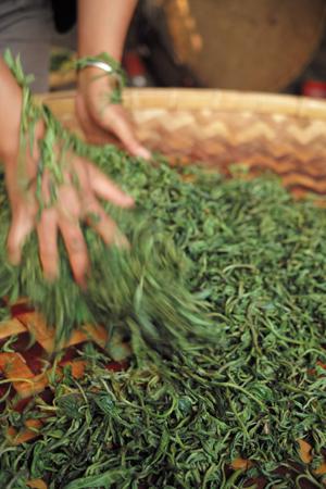 春尖の茶葉