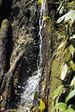 西双版納の山の泉