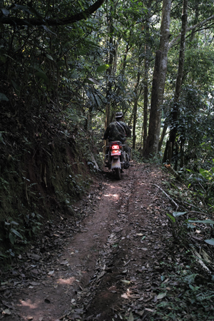 バイクで森に入る