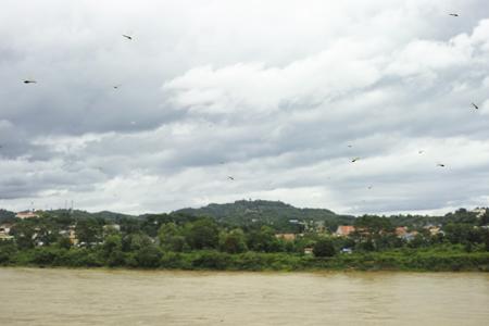 メコン川とトンボ