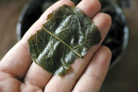 葉底の大きな葉